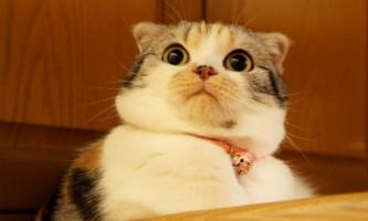 Чому кішки так імпульсивні