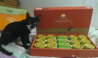Чому кішки так вибагливі в їжі