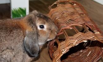 Чому кролик гризе клітку і що з цим робити?