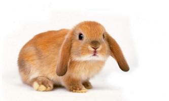 Чому кусаються декоративні кролики?