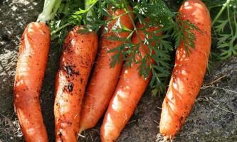 Чому морква помаранчева?