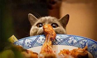 Чому деякі кішки їдять тільки один вид їжі?
