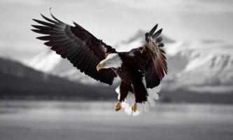Чому орла назвали орлом?