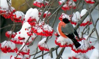 Чому снігура назвали снєгірьов?