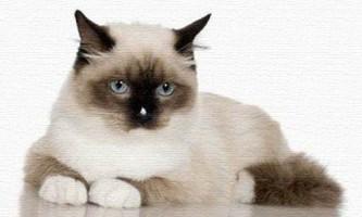 Чому у кішки випадає шерсть