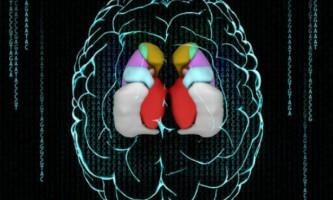 Чому у людей розмір головного мозку різний