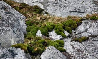 Чому в антарктиді росте мох