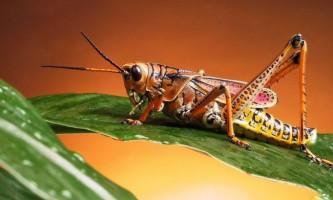 Чому в світі так багато видів комах, але людей - мало?