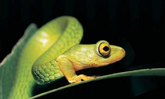 Чому змії втратили свої ноги