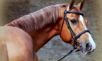 Під астраханню мікроавтобус зіткнувся з конем