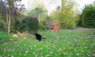 Підготовка газону до зими