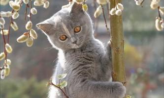 Підшкірний кліщ у кішок (демодекоз): що потрібно знати власникам
