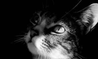 Підлітки з детройта розстріляли кішку