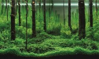 Підводні пейзажі сучасних акваріумів