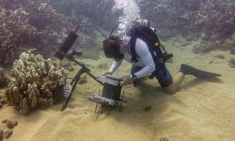 """Підводний мікроскоп допоміг зняти """"цілуються"""" коралових поліпів"""