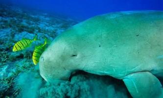 Підводним пасовищах загрожує небезпека