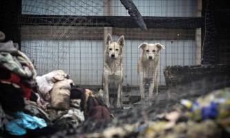 Підпал московського притулку для бездомних тварин