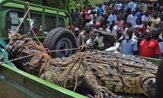 Спійманий крокодил-людожер, що тероризував жителів уганди