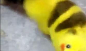 Шанувальник pokemon go перефарбував свою собаку під пікачу