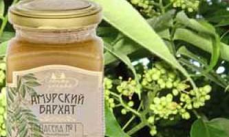 Корисні і лікувальні властивості меду амурський оксамит, протипоказання