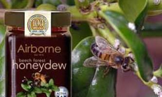 Корисні і лікувальні властивості падевого меду, основні характеристики