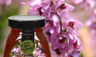 Корисні властивості і протипоказання верескового меду