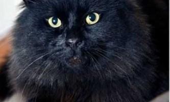 Поліцейські не можуть впоратися з чорним котом, нападаючим на людей