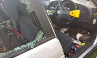 Поліцейські розбили вікно машини для порятунку собаки