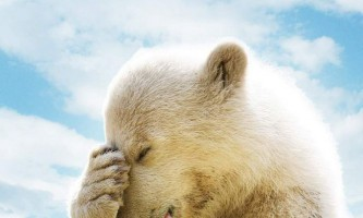 Полярних ведмедів винищує глобальне потепління