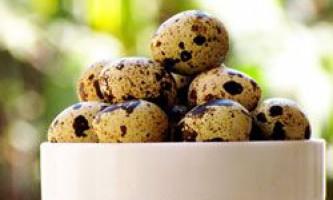 Користь і шкода від вживання перепелиних яєць