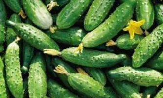 Допоможи собі сам: самозапильних огірки