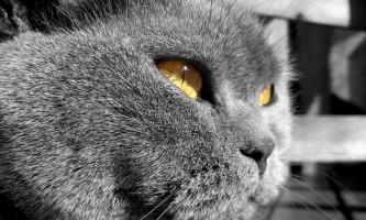 Пронос і / або блювота у кішки: рекомендація ветлікаря