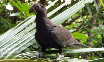 Папуги виявилися єдиними тваринами, які використовують шліфувальний інструмент