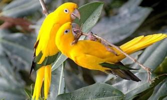 Папуги: види, спосіб життя, харчування, цікаві відомості