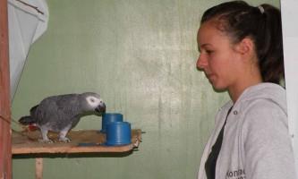 Папуги жако проявили кмітливість трирічну дитину