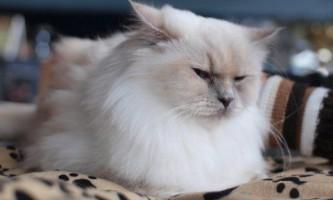 Популярні заспокійливі засоби для кішок - опис і відгук