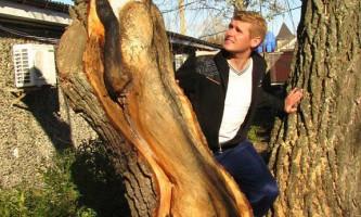 Вражаючі дерев`яні скульптури николая гліба