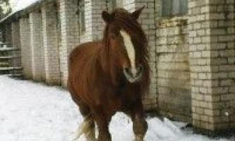 Порода коней російський ваговоз