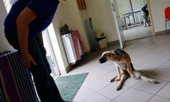 Порода собаки відображає характер її власника