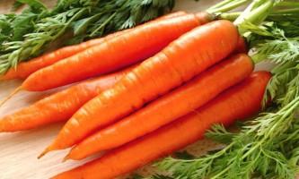 Посадка моркви під зиму