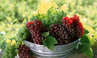 Посадка винограду навесні