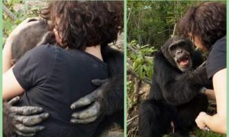 Після довгих років самотності шимпанзе нарешті обійняв людини