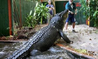 Після смерті лолонга, крокодил кассіус клей повернув титул найбільшого