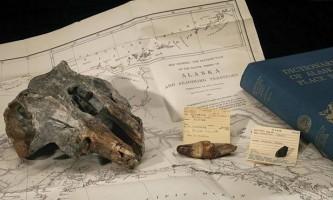 Останнього предка гангська дельфіна знайшли на аляски
