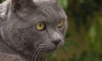 Загубилася кішка зустрілася з господарями через 11 років