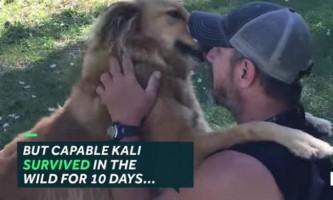 Загубився пес возз`єднався з господарем після того, як вижити в дикій природі