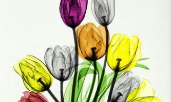 Приголомшливі знімки природи, зроблені за допомогою рентгенівських променів