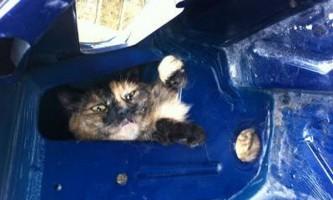 Пожежники врятували кота, який застряг в обшивці автомобіля