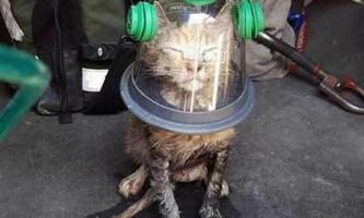 Пожежні бригади набувають кисневі маски для тварин