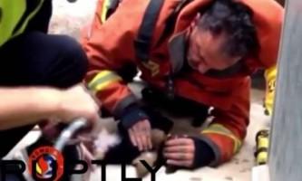 Пожежний врятував цуценя, зробивши йому штучне дихання